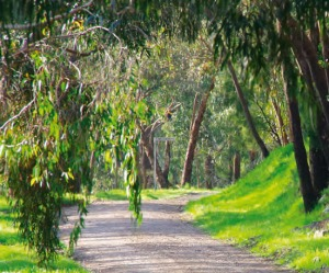 foothills walk